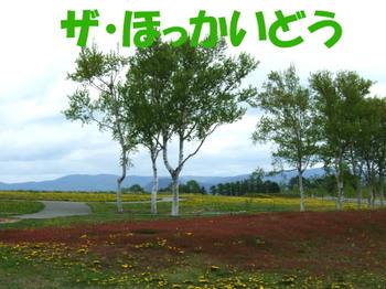 Sairo1_2