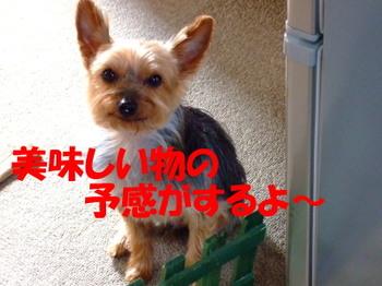 Taro1
