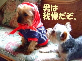 2008_0525rennketu0027