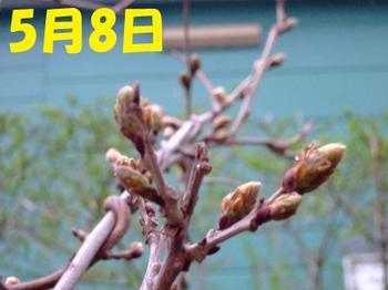 Dscf5176