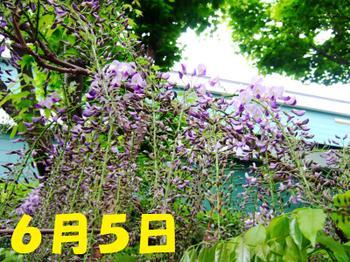 Dscf5675