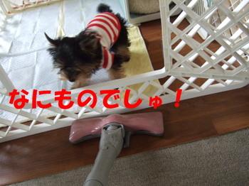 Photo_142