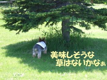 Photo_179