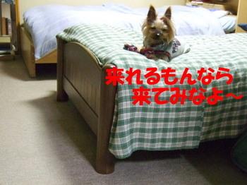 Photo_195
