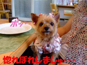 Photo_211
