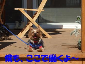 Photo_215
