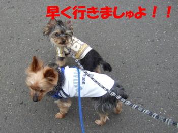 Photo_216