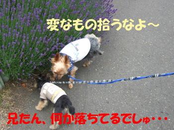Photo_217
