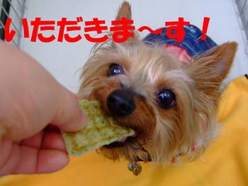 Photo_73