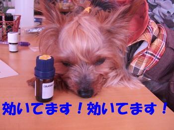 Photo_76